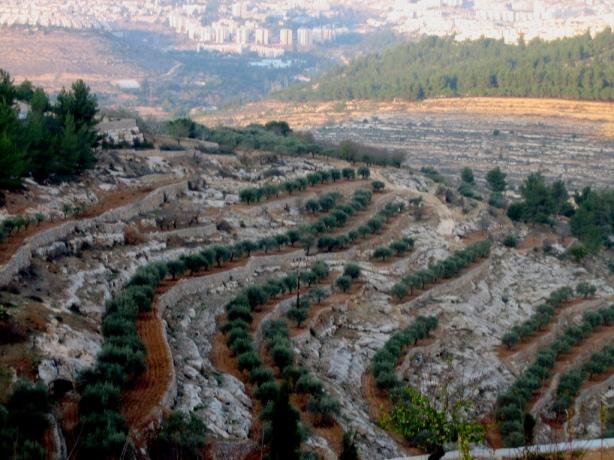 هذه مدينة بيت لحم التي اسكن فيها   Bethlehem-10563