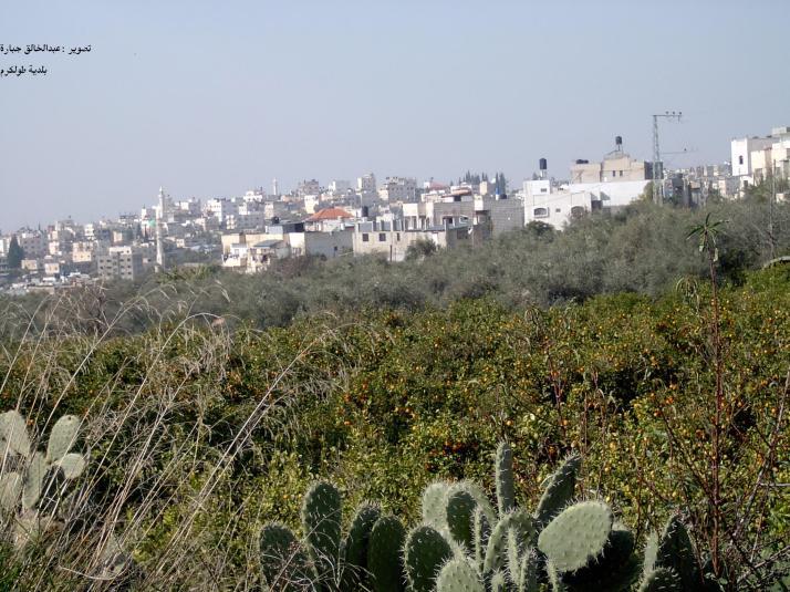 طولكرم ... جبل الكرم .... معا لنتعرف على مدن فلسطين  Tulkarm-13477